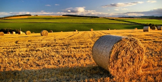 Agriculture post-Brexit: a battleground for the UK's constituent nations