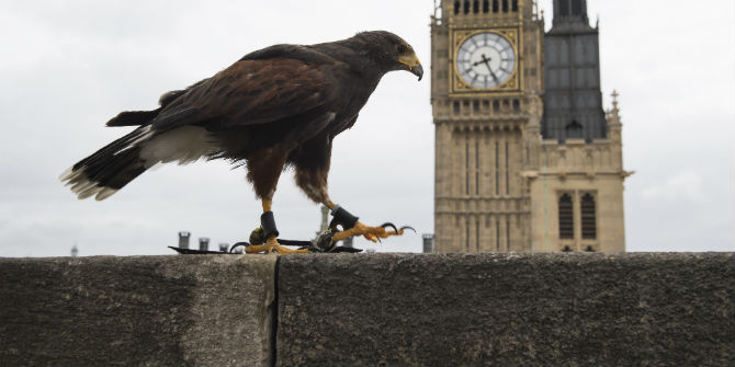 hawk parliament