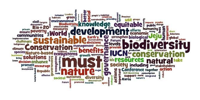 CSR word cloud