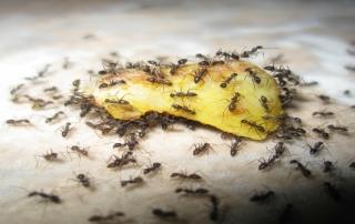 Swarm behaviour