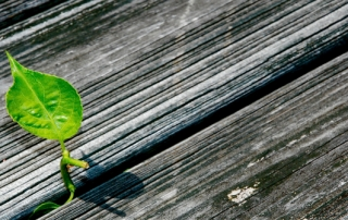green-growth-image
