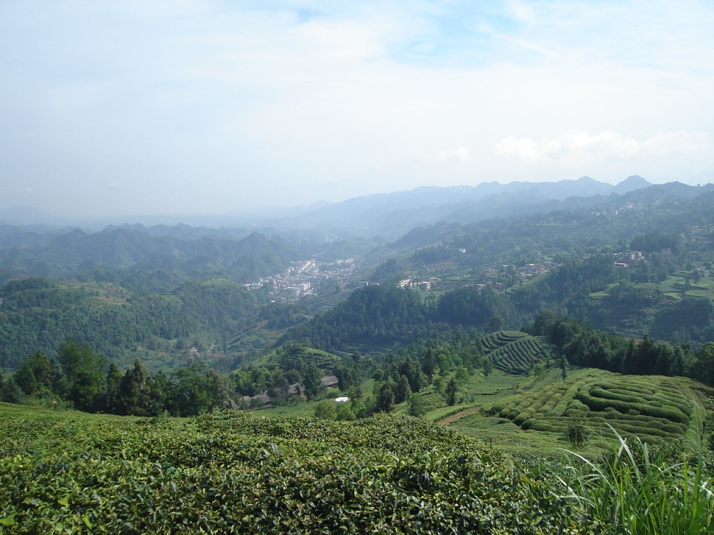 Tea plantations and the valley of Bashan