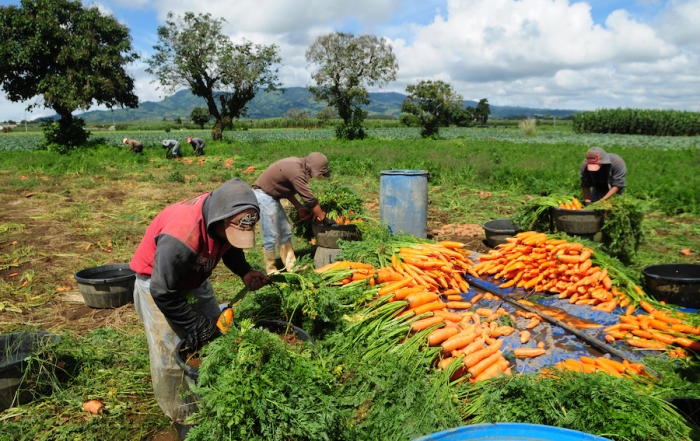 Strengthening rural value chains in Latin America