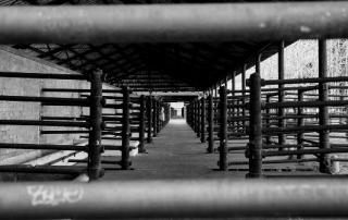 slaughterhouse-329350_1280.jpg