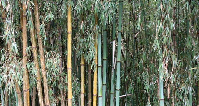 beyond-bamboo-670