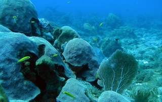 Coral Reef. Photo credit: NOAA's National Ocean Service, via Flickr (https://www.flickr.com/photos/usoceangov/5514332777/). Licence: CC BY 2.0