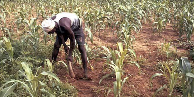 Hoe farming, common in so many African countries, needs to become a thing of the past Credit: International Institute of Tropical Agriculture via Flickr (http://bit.ly/1VqOtoa) CC BY-NC 2.0
