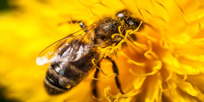 Bee Image 2