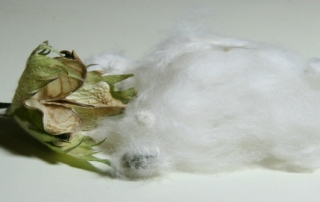 cotton-image