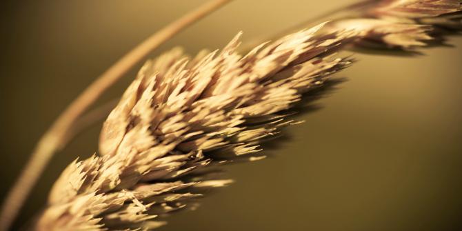 a grain of wheat chapter summaries