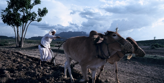 Empire of Information: The War on Yemen and its Agricultural Sector
