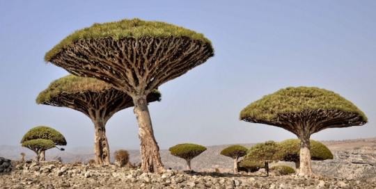 Vying for Paradise? What Socotra Means for the UAE and Saudi Arabia