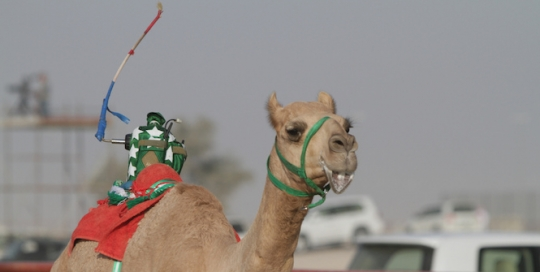 Sports and Heritage in the UAE