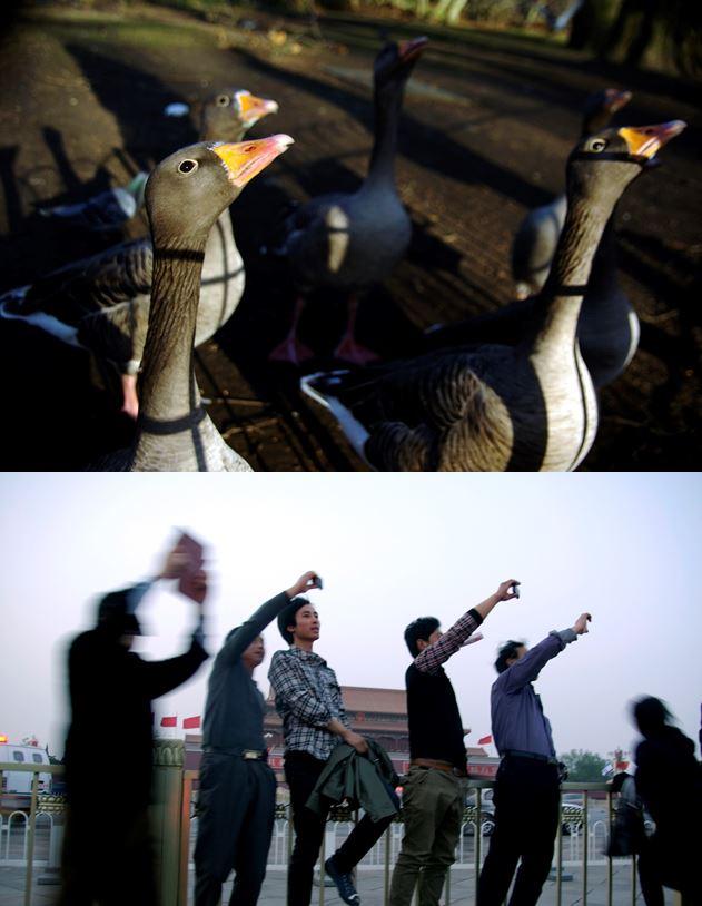 Yanning Huang - Imagination of Political News