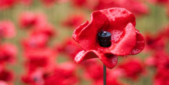 Five recommended reads for the Armistice Day Centenary