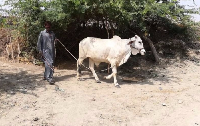 Tracing the impact of El Ninoon agriculture and life inMirpur Khas