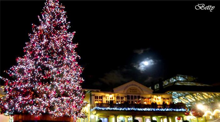 Fred Meyer Christmas Lights