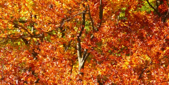 Five things that make Autumn special for a student