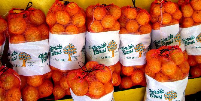 florida oranges featured